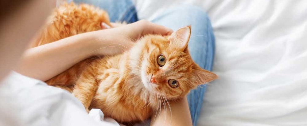 Советы по уходу за кошками в Москве