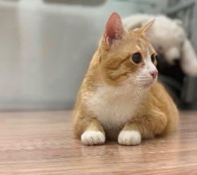 Кошка в Москве - ВАО
