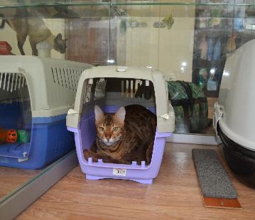 Клетка для передержки кошки