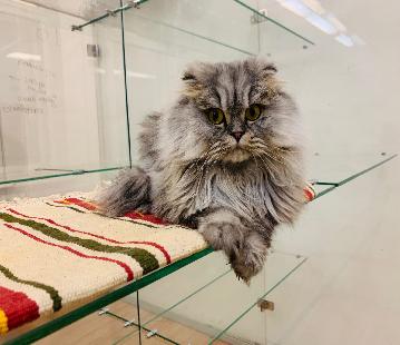 Где оставить кошку на время отпуска в Москве