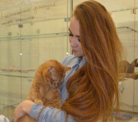 Отель для кошек - безопасная передержка