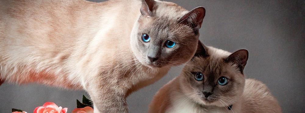 Гостиница для кошек с большими номерами