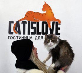 Кошки в Москве - Тушино
