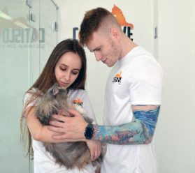 Услуги передержки кошек