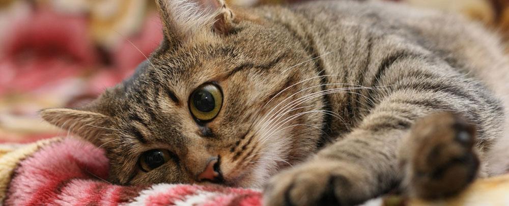 Отдать кота на передержку в Москве