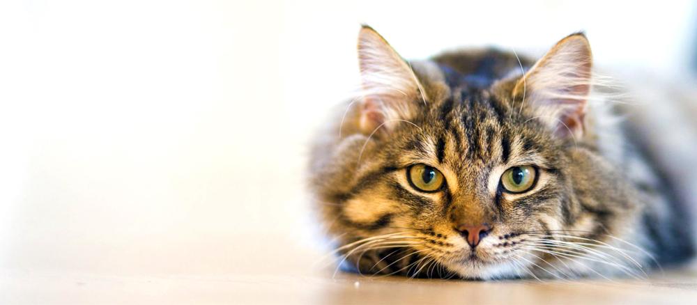Нужна передержка для кошки в Москве
