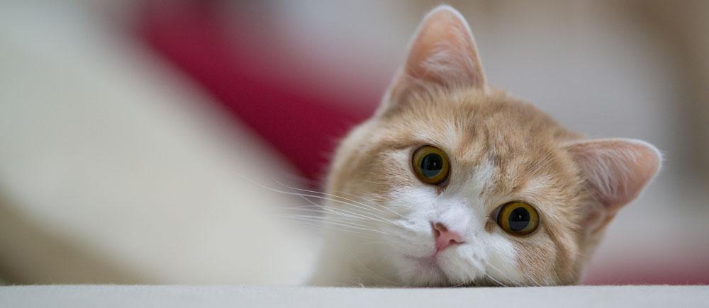 Сколько стоит передержка кошек в сутки в Москве