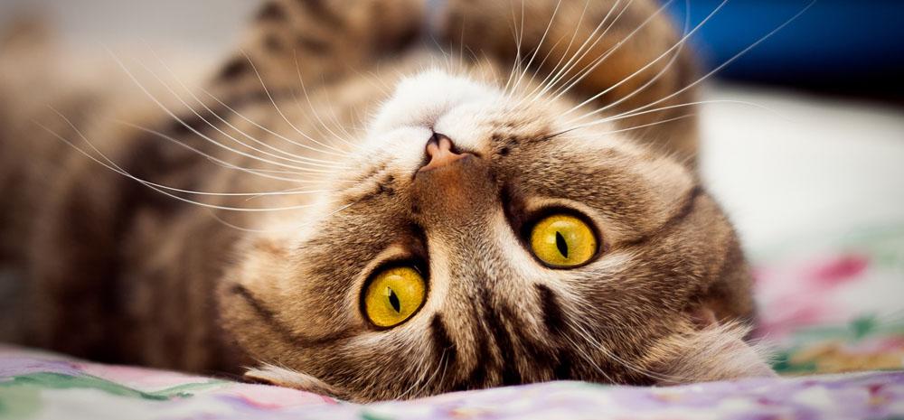Сколько стоит передержка кота в Москве