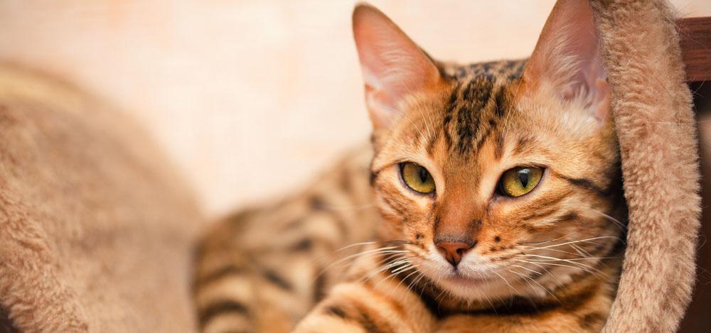 Услуги передержки кошек в Москве и области