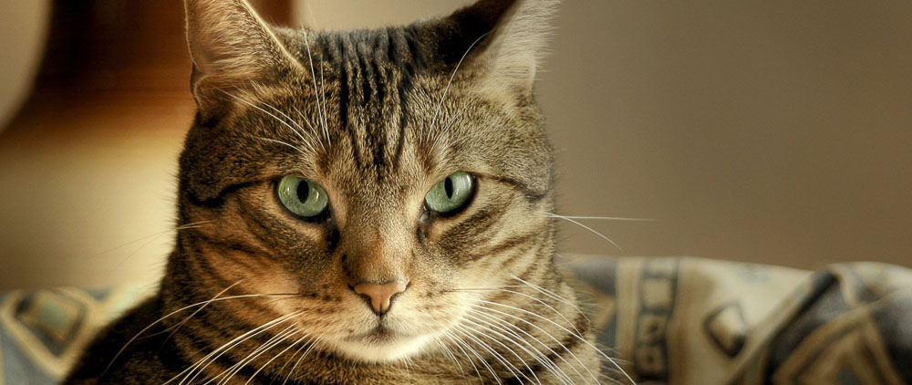 Возьму на передержку кошку в Москве