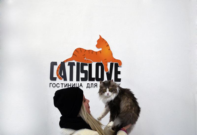 Передержка котов, кошек и котят