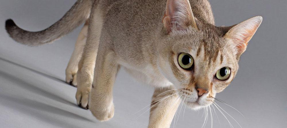 Отзывы по передержке кошек