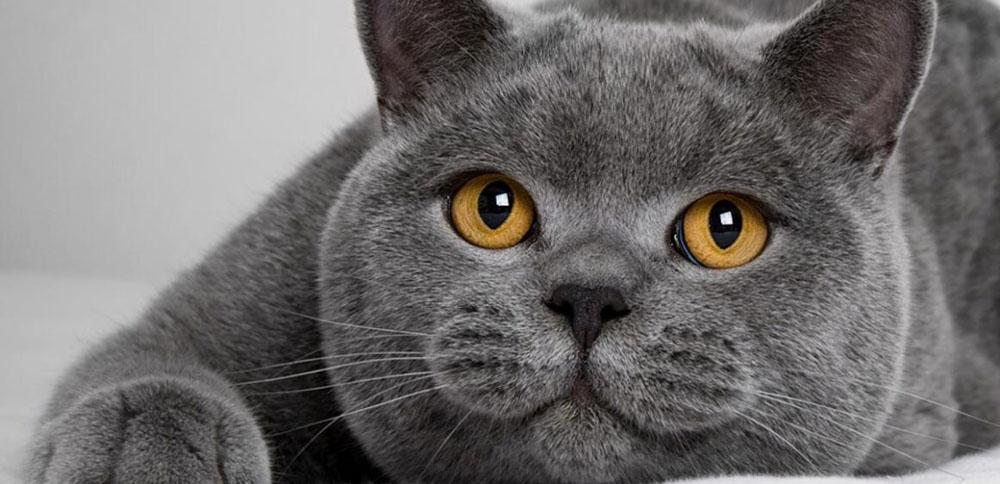 Цены на передержку котов и кошек в Москве