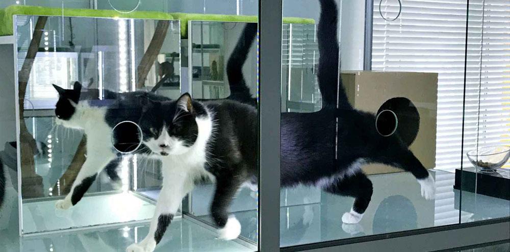 Передержка кошек недорого в Москве
