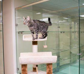 Передержка кошек в Долгопрудном