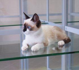 Гостиница для кошек в Москве ЮЗАО