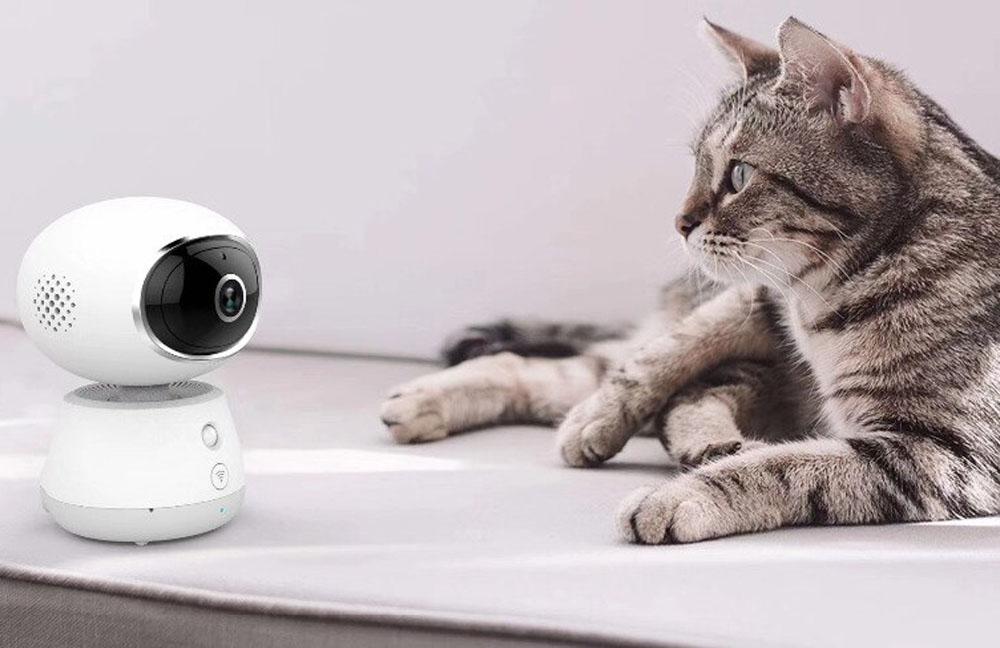 Отель для кошек c видеонаблюдением