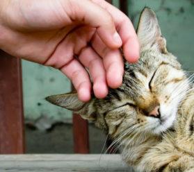 Гостиница для кошек в Раменском